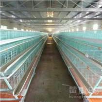 西平中州三層階梯五門蛋雞籠肉雞籠育雛籠廠家批發