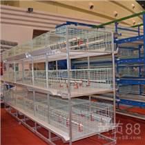 養殖場家禽類生態養殖需要全自動化養雞設備