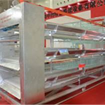 養殖設備6層蛋雞籠養雞設備廠家