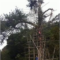 古树防雷措施特种防雷工程?#25163;?#27827;南扬博防雷接地工程