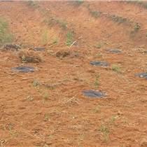 新型生态防草布    农业地膜