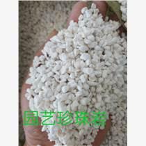 供应广州优质园艺珍珠岩
