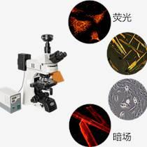研究級熒光顯微鏡MF43