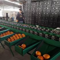 冰糖橙选果机 橙子分大小的机器 脐橙分选机