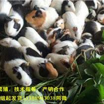 10組花毛豚飼養條件種苗