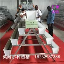 草莓種植槽 大棚立體栽培槽 無土栽培槽