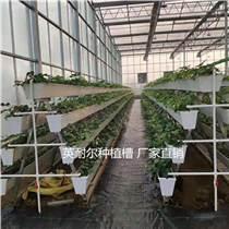 英耐爾草莓槽架子、蔬菜槽架子