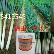 日本铁杆大葱种子 家禄牌高产新品种 井川一本 井冈晚