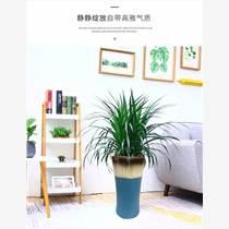 重慶植物租擺,重慶花卉租賃,重慶植物出租
