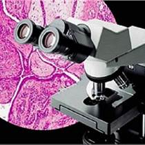 CX31生物顯微鏡