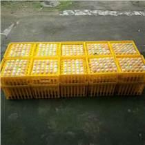 42枚種蛋蛋筐孵化場專用種蛋筐塑料雞蛋運輸筐