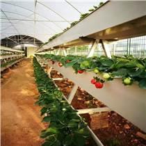 供應草莓栽培槽 立體果蔬種植槽
